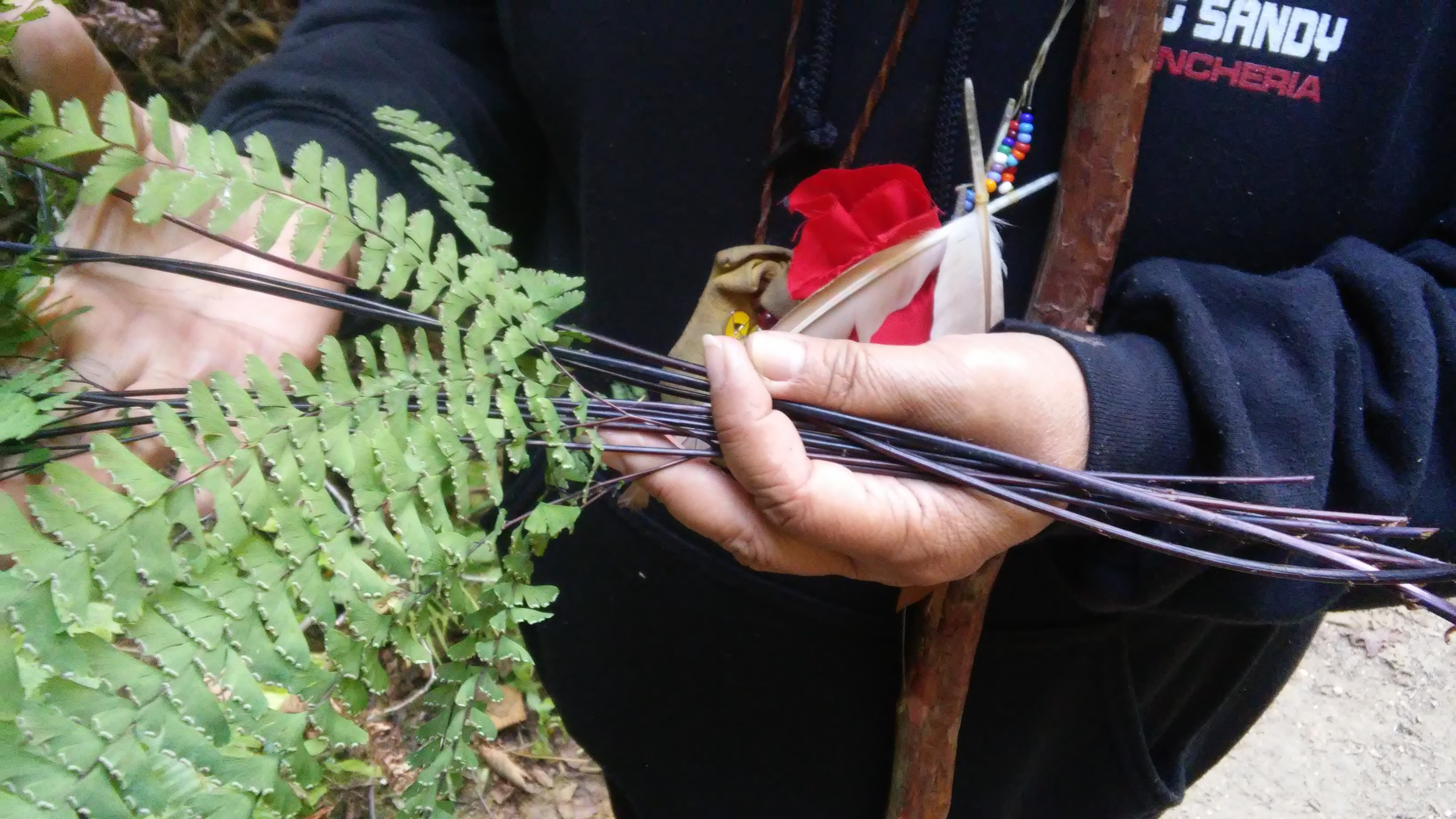 Tribal Elder Eleanor Castro holds a bundle of five-finger fern (Adiantum aleuticum), a basketry plant, while gathering in lands administered by the Midpeninsula Regional Open Space District.