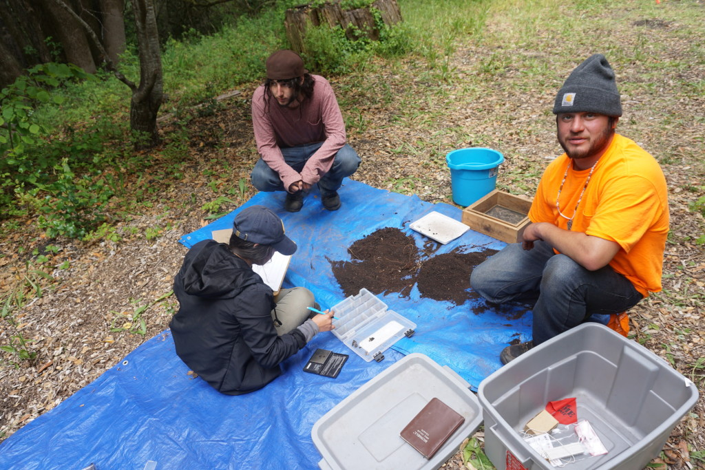UCB undergraduate Miriam Lagunas (left) and Native Stewards Ian Girouard (middle) and Paul Lopez (right) count and weigh archaeological materials recovered through surface survey at an archaeological site near Laguna Creek.