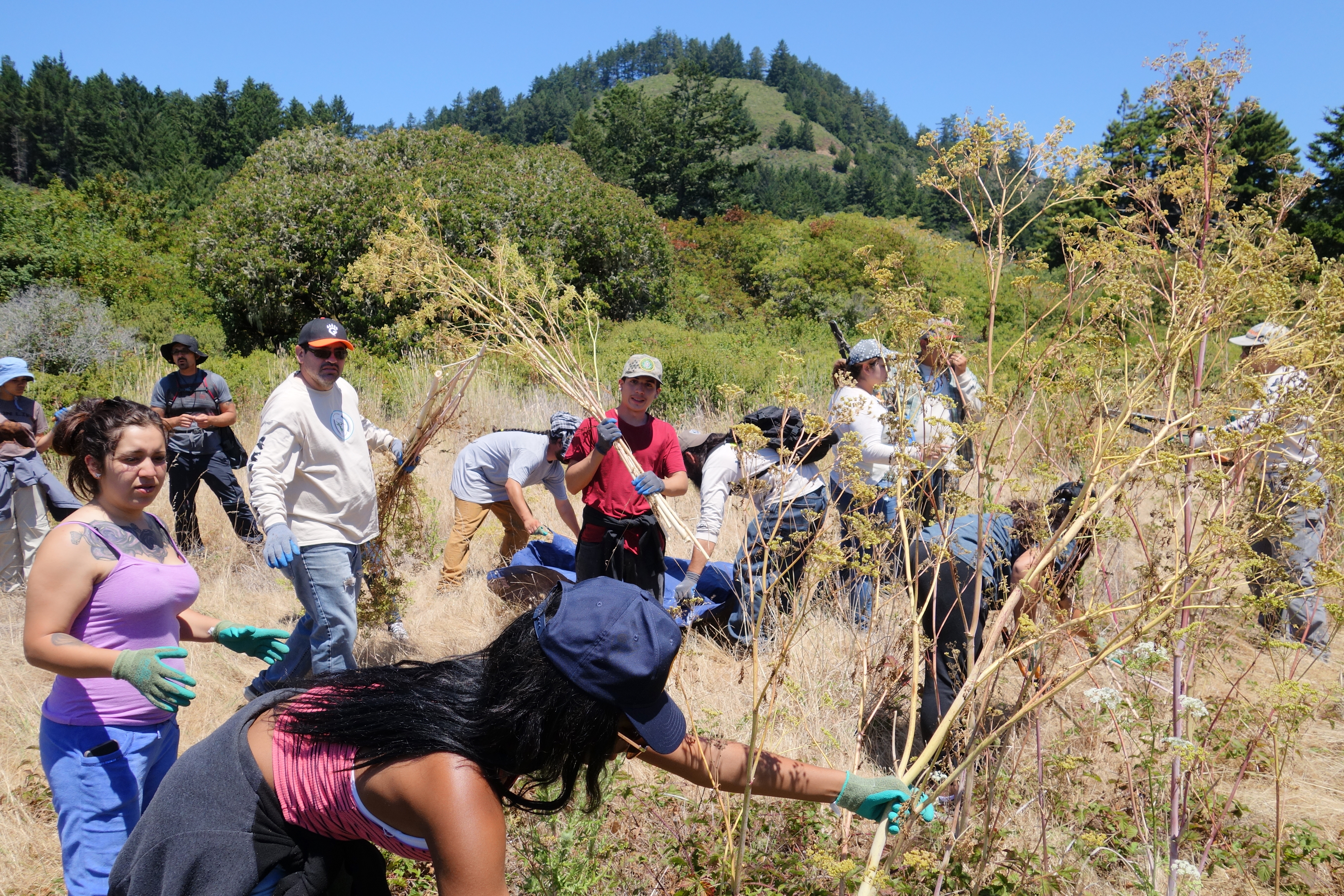 Getting hands-on stewardship experience removing invasive plants. Photo courtesy Cat Wilder.